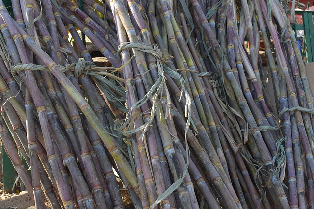 sugar cane in a stack
